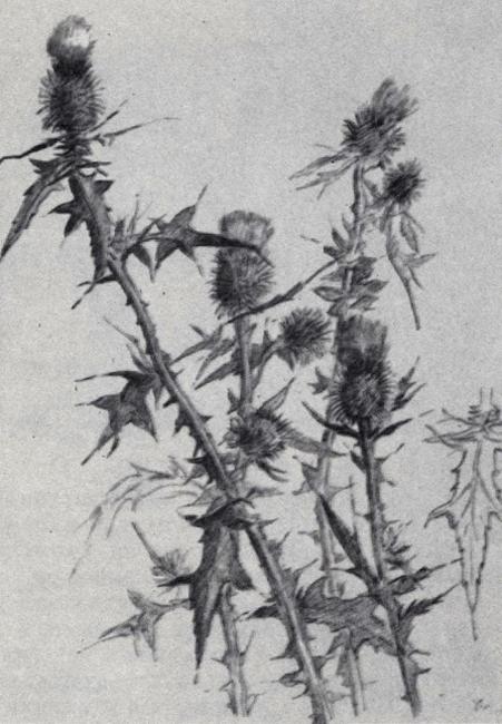 drawing6_12