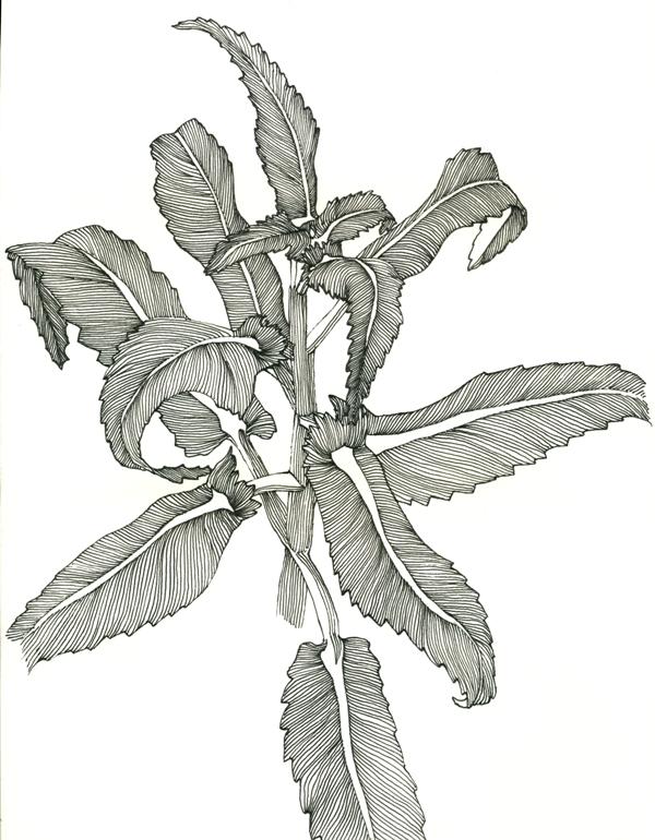 plant-mysketchs-com_